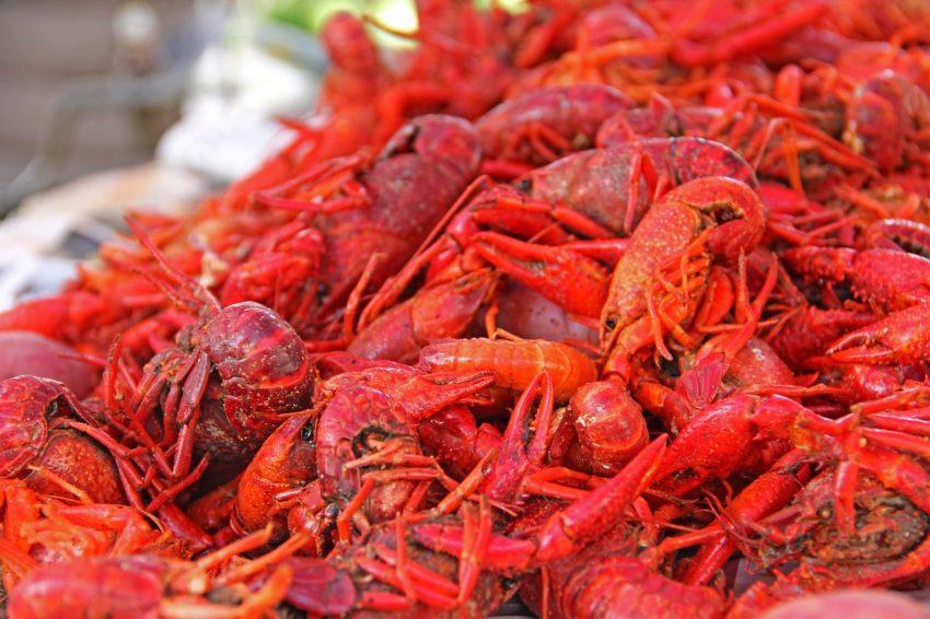 New Orleans er en af de byer, man bør besøge, hvis man kan lide god mad. Skaldyr er en af byens specialiteter.
